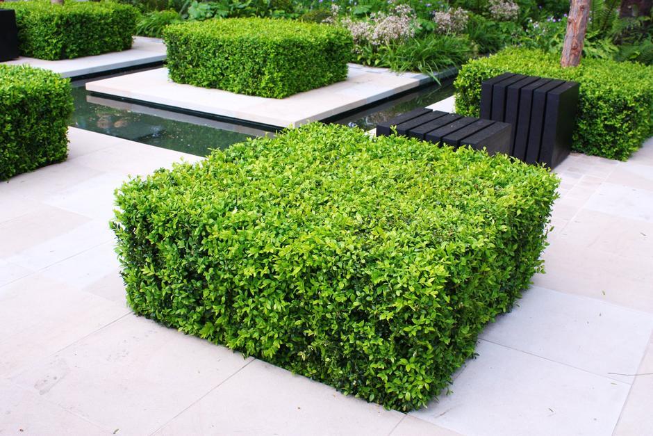 Evergreen Gartenbau gartenbau kubart gärtnerei floristik